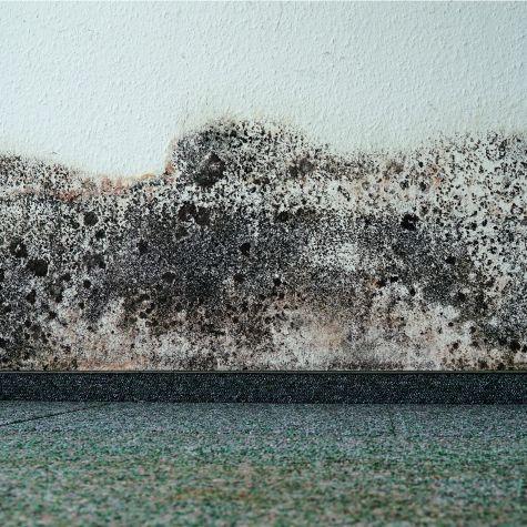 Schimmelbefall an der Wand einer Wohnung